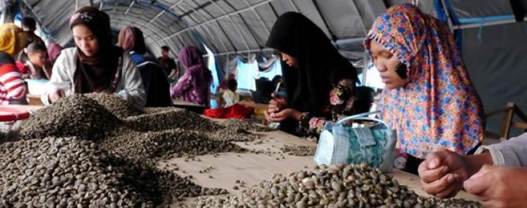 Aceh Jajaki Pasar Baru Kopi Di Eropa